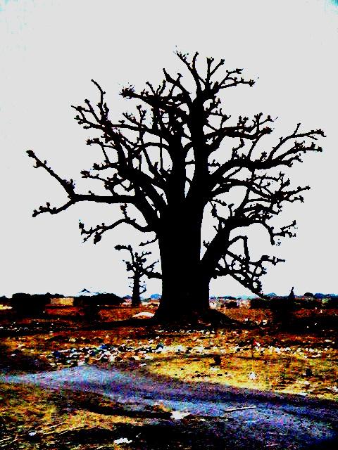 Copie_de_foret_de_baobabs_16